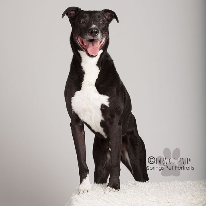 Mixed-breed-dog-portraits-COlorado-Springs-best-dog-photographer.jpg