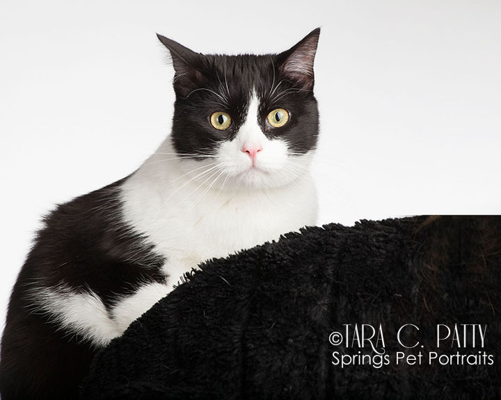 classic-black-and-white-cat-portraits-Colorado-Springs.jpg