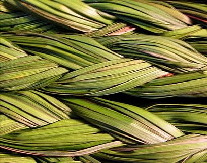 Book Club: Braiding Sweetgrass — Diablo Trust
