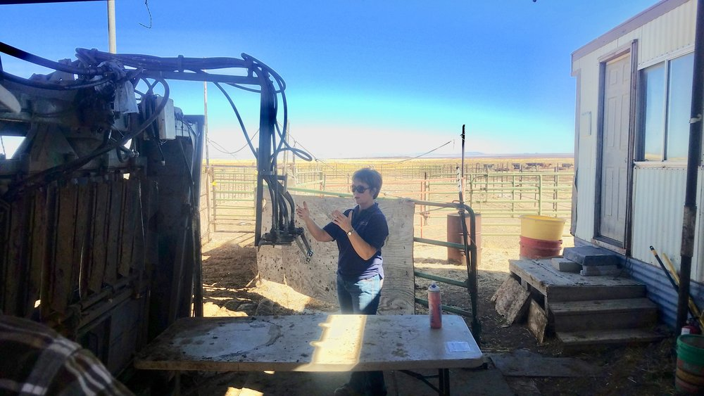 Judy demonstrates how to use the hydraulic chute at the headquarters corrals.