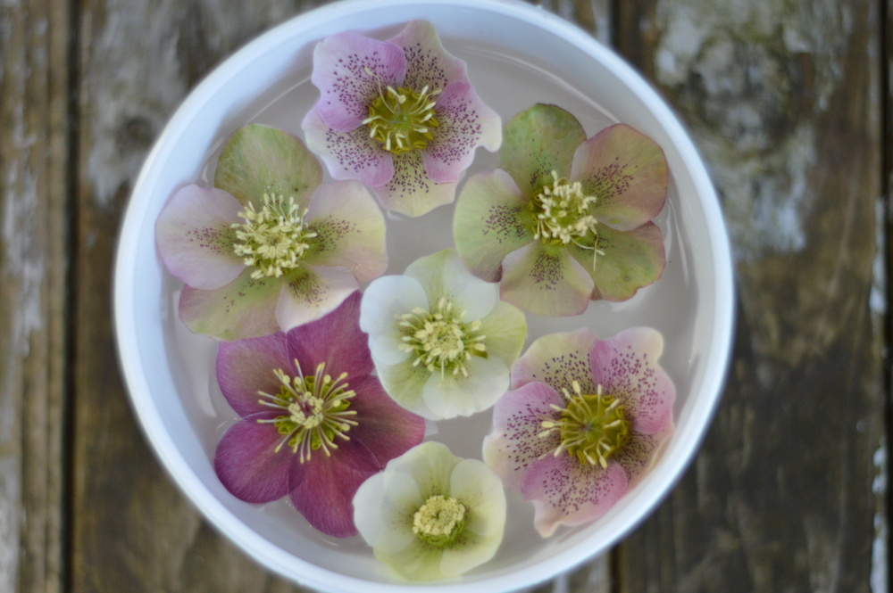 So much going on in a single hellebore bloom.