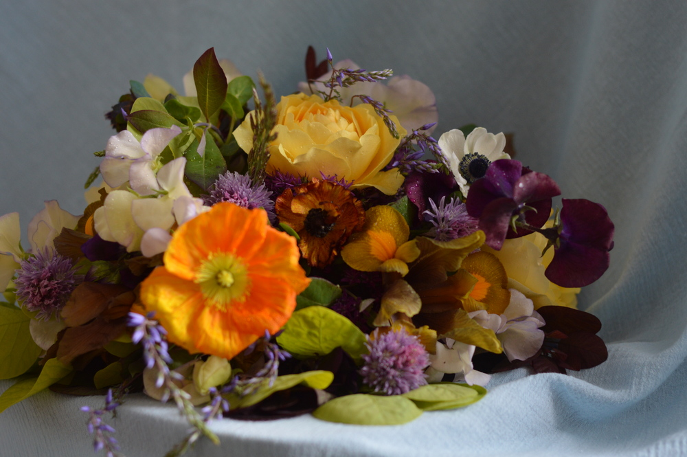 Experimenting with an unusual color palette for a possible bridal bouquet with May cutting garden blooms.
