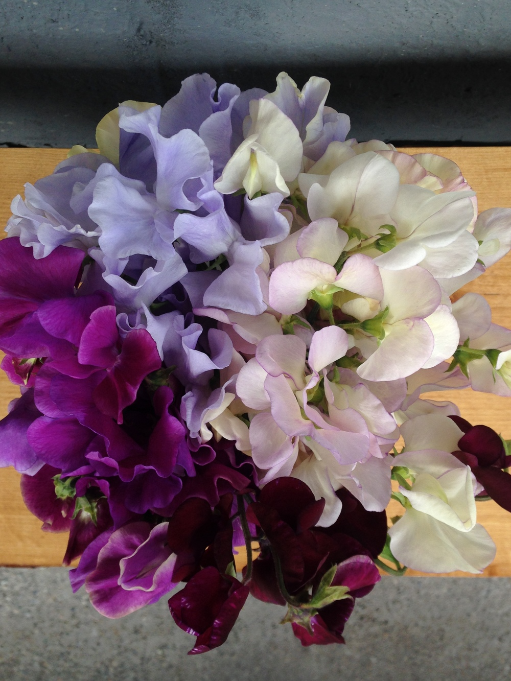 Fifty shades of purple. Sweet peas from the Black House cutting garden.
