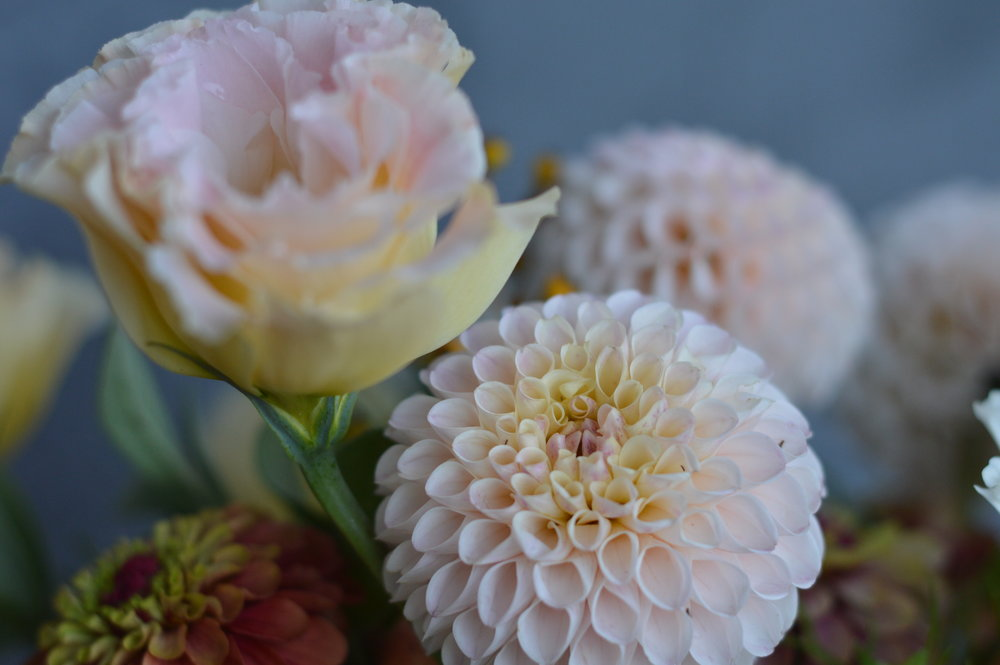 Dahlias, lisianthus, and zinnias