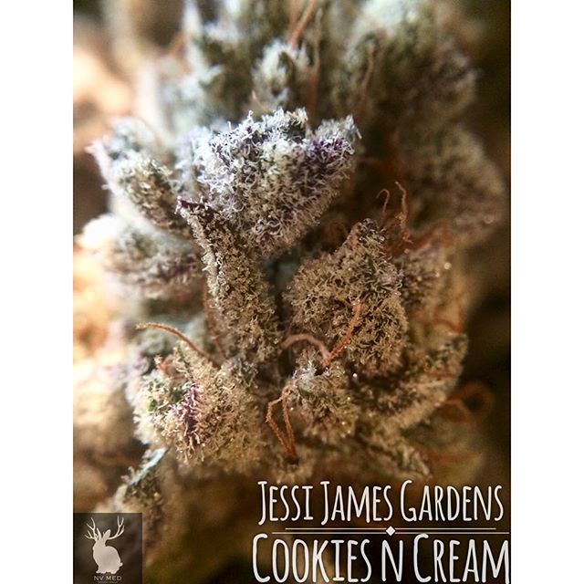 This super frosty Cookies n Cream by @jessijamesgardens is perfect to help brighten up this cloudy Sunday! #NVmed #NVmedical #NewVansterdam #highonfreedom #ommp #jessijamesgardens