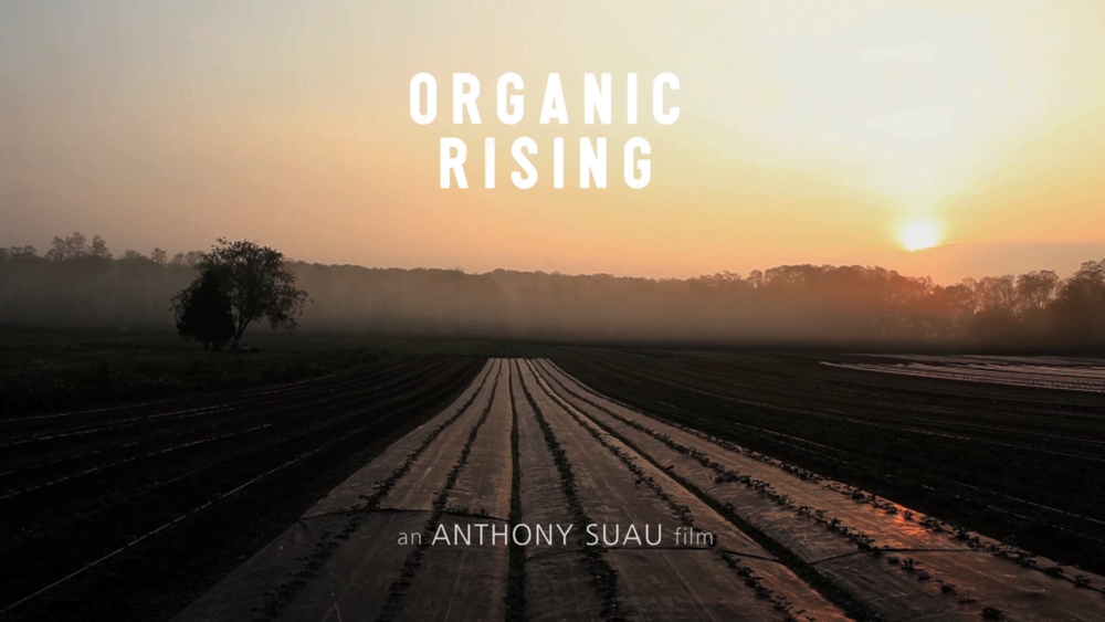 Organic_rising_09.png