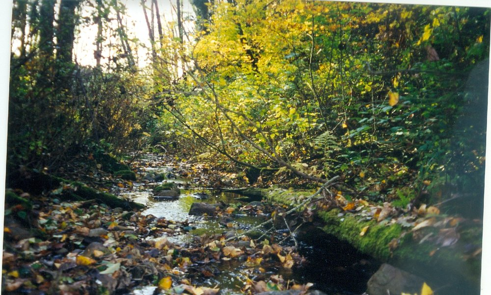 Haynie Creek with trees.jpg