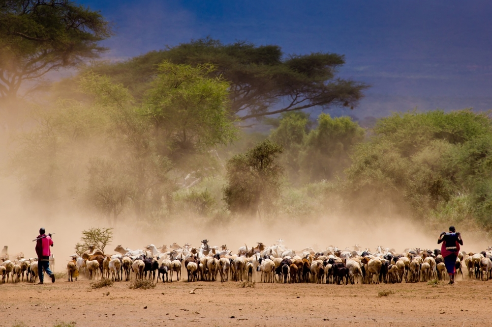 Government of Tanzania