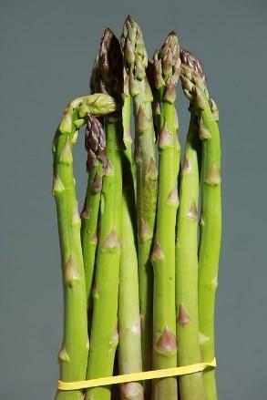 asparagus - march FOTM.jpg