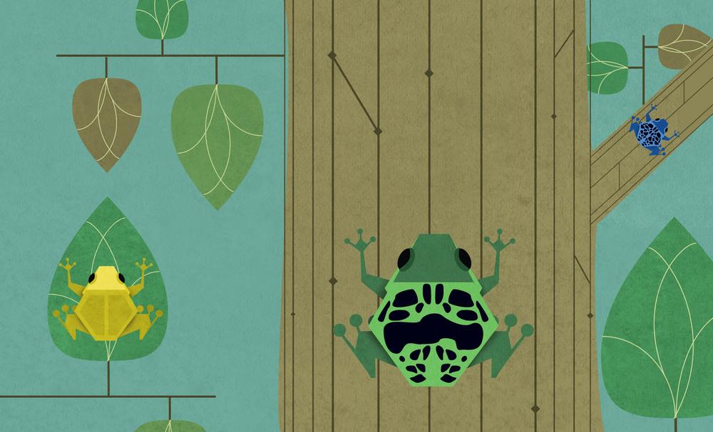 1_Frogs.jpg