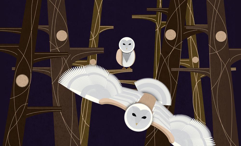 6_Owl.jpg