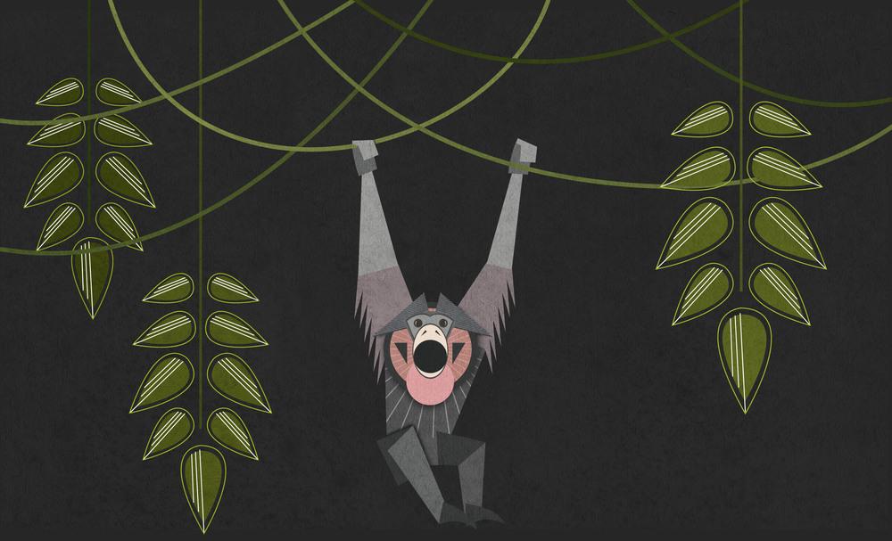 8_Monkey.jpg
