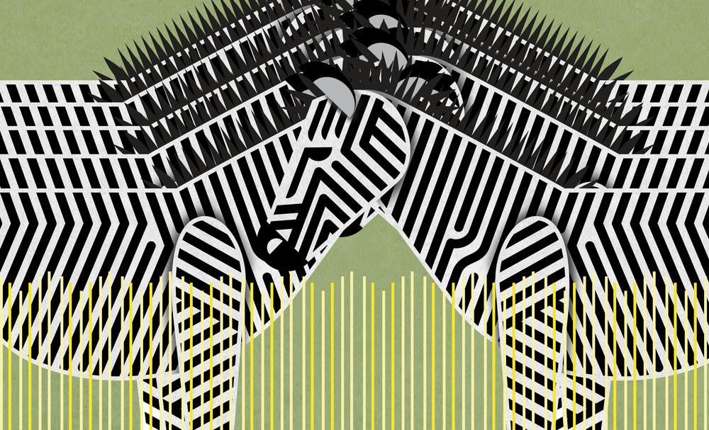 12_Zebra.jpg