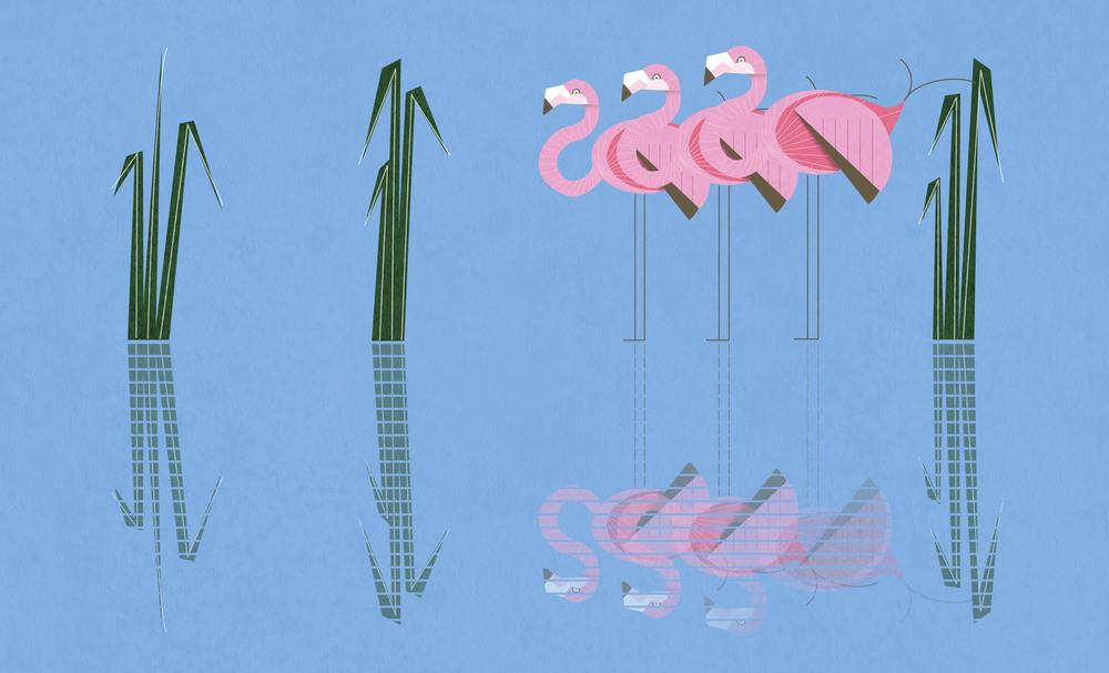 2_flamingos.jpg