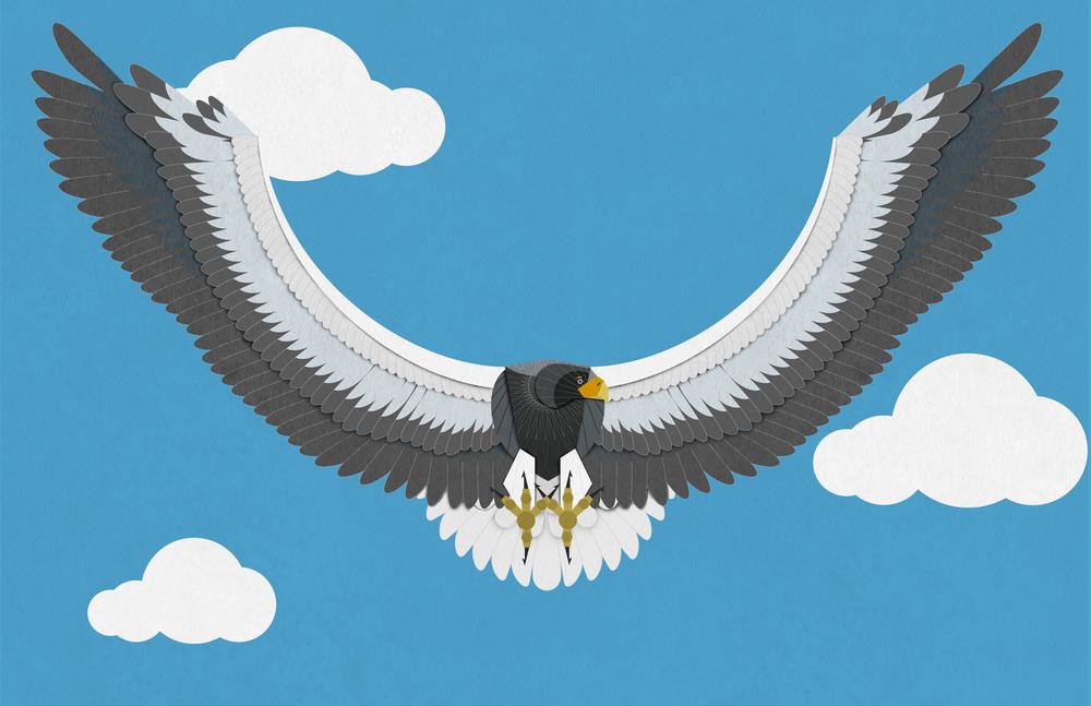 3_Stellers_Eagle.jpg