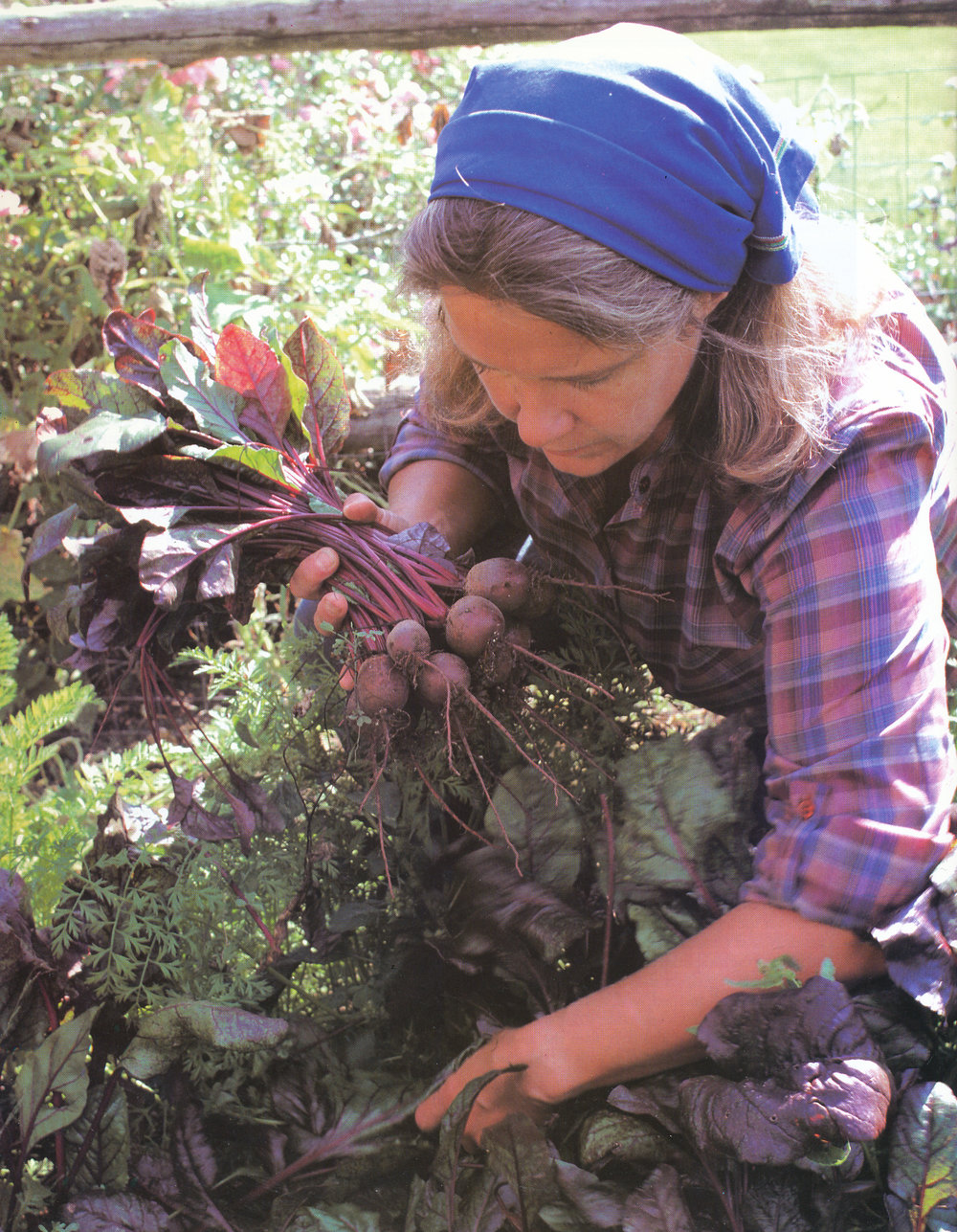 Marian collecting beets from the garden. From 'The Victory Garden Cookbook', 1982.