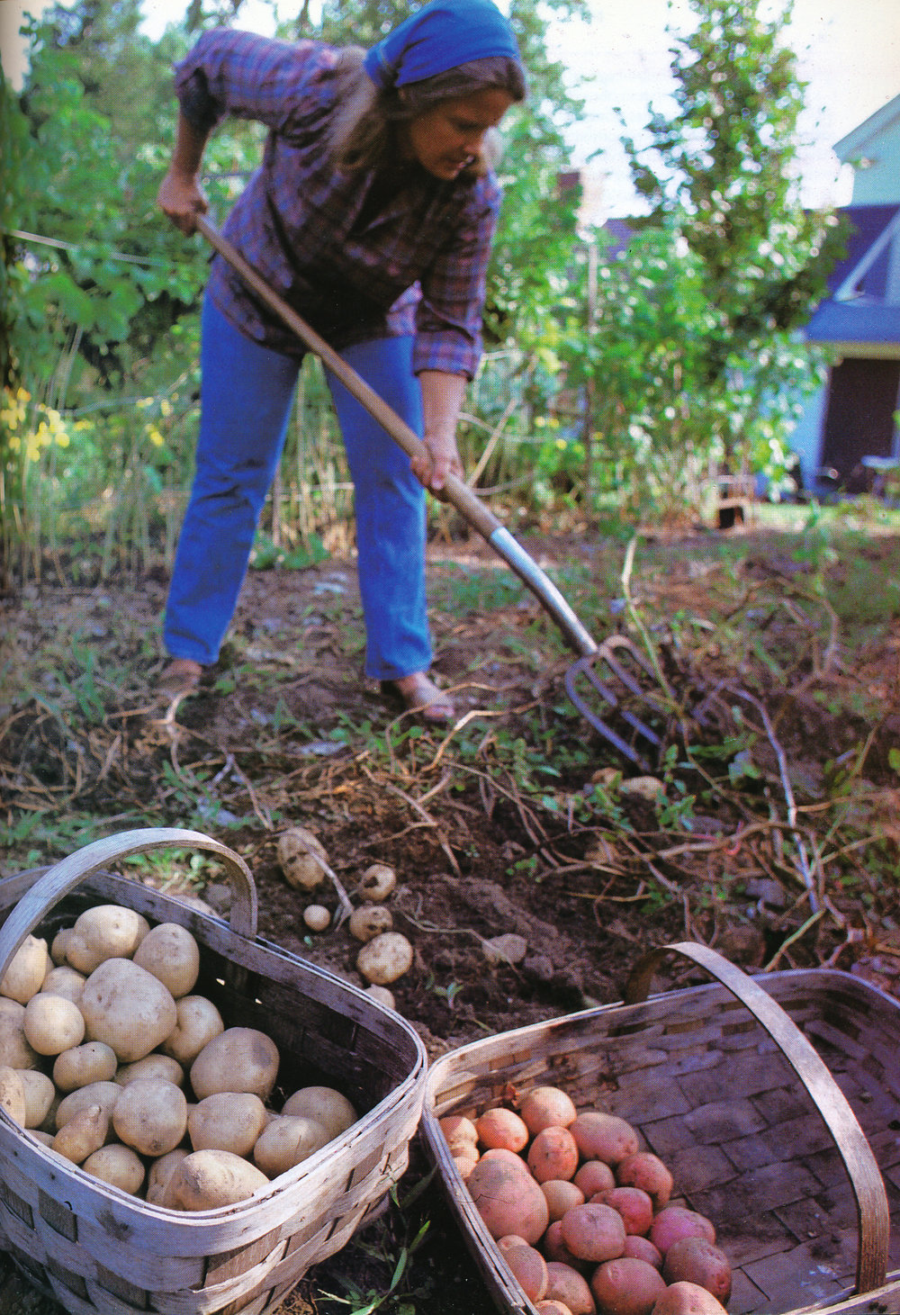 Marian showing potatoes. From 'The Victory Garden Cookbook', 1982.