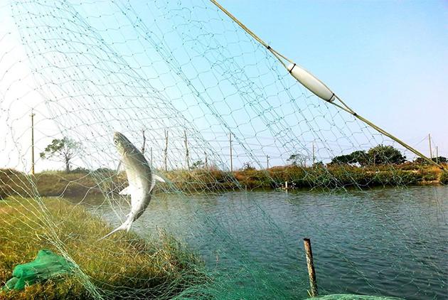 台灣西南岸地層下陷嚴重,台灣好漁希望以社會企業支持照顧環境的養殖業者。  圖片來源: 台灣好漁提供