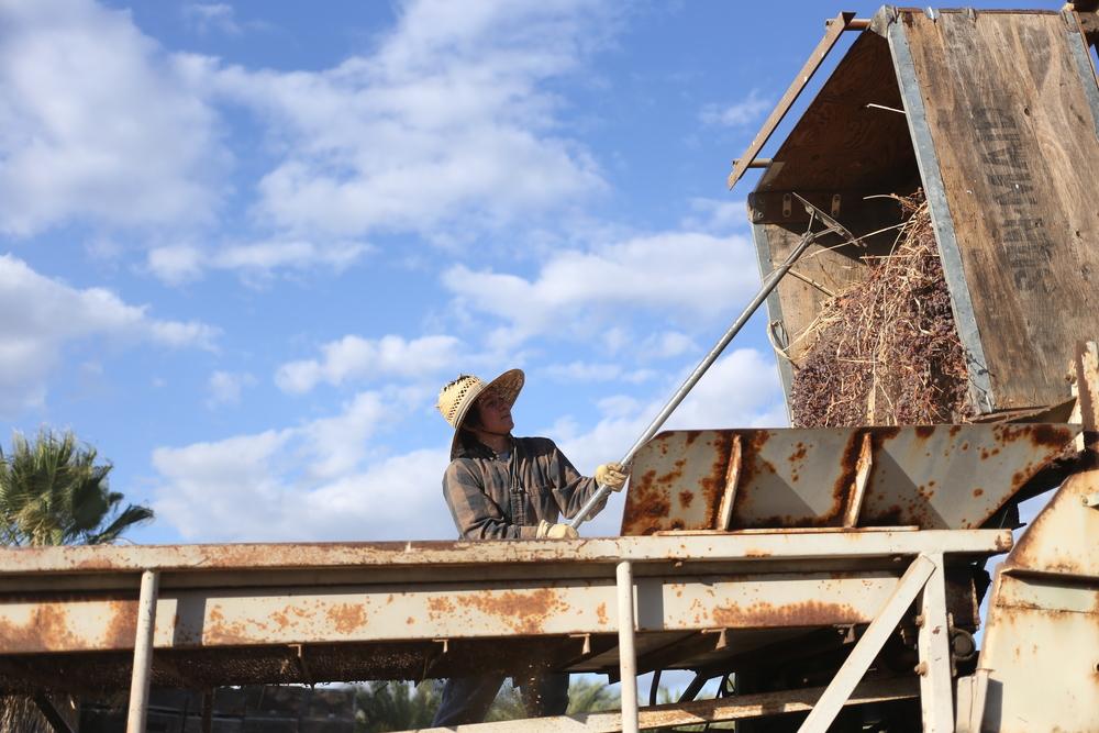 Nikiko Masumoto working on the Masumoto Family Farm in CHANGING SEASON (photo Alan Sanchez)