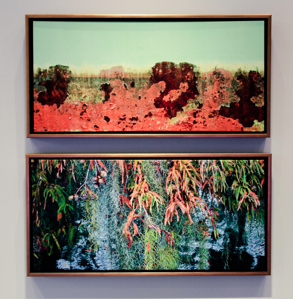 Marshland , 2006 (top) from the Louisiana Marsh series, and  Autumn Cypress , 2009 (bottom) from the Acadian Wetlands series