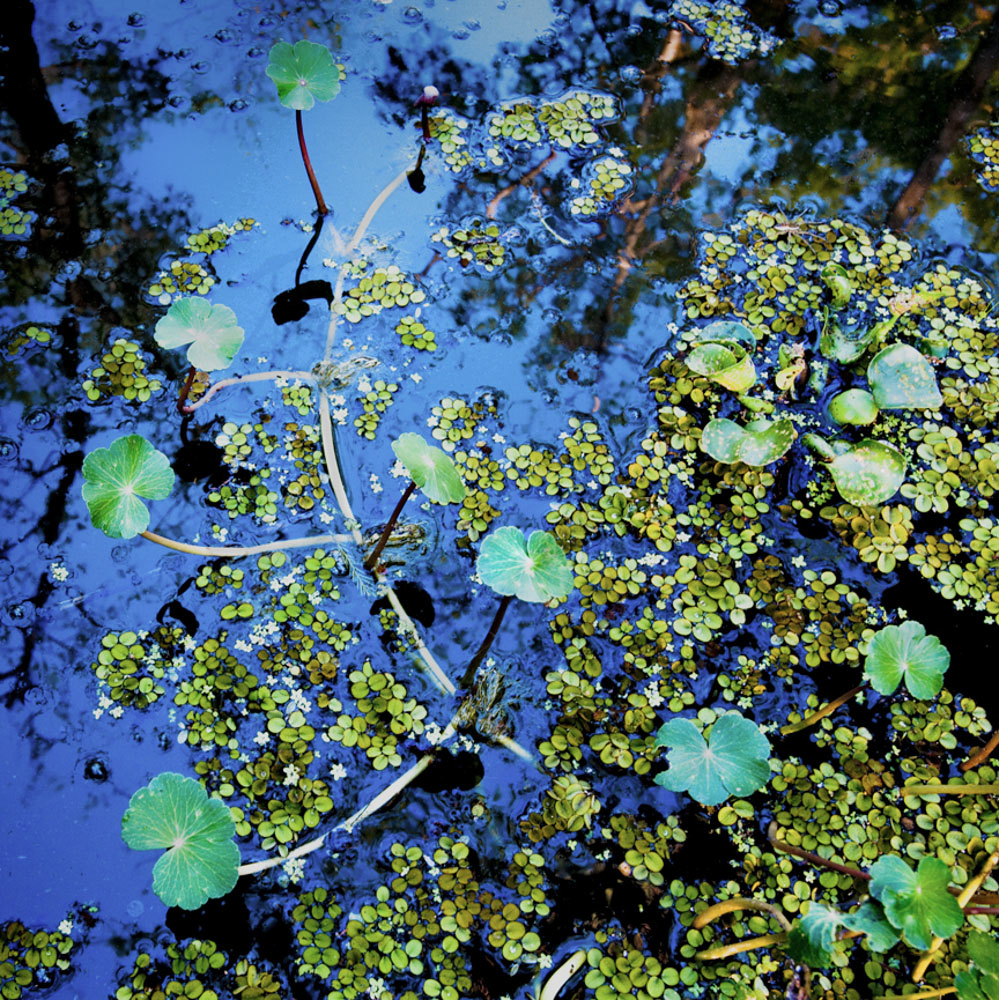 Duckweed #4, 2009, now at The Collider in Asheville