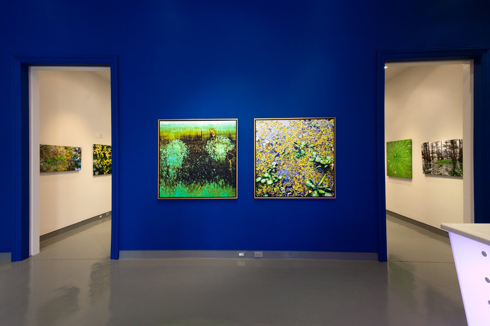 Martine Chaisson Gallery, 2010/11, New Orleans, LA (from left, Still Under Water, Duckweed)