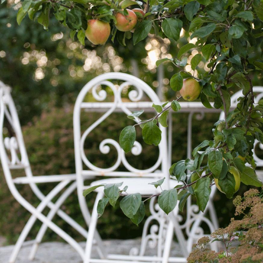 En av hagens største skatter er dette epletreet – plantet av min bestefar.