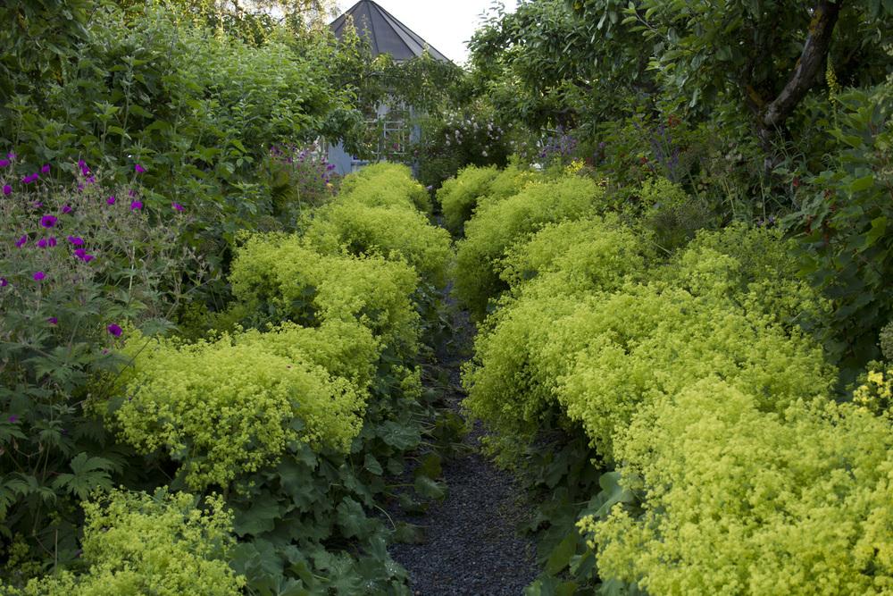 I morgen lørdag 25.07 og søndag 26.07 blir siste mulighet for å besøke hagen på Fredholm i juli. Ettersom det ikke er den helt store sommervarmen, holder plantene koken lenger enn vanlig. Og selv om stormarikåpen nesten har vokst meg over hodet, og veltet seg både hit og dit, blomstrer den fortsatt flitting