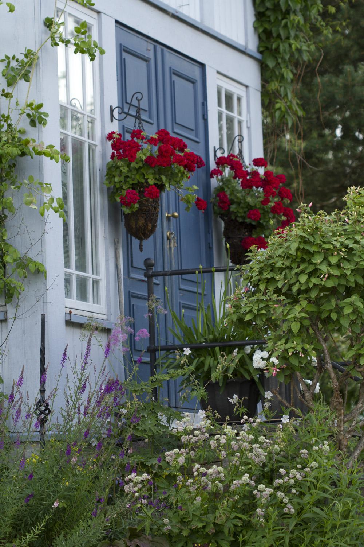 Pelargonene ved døren er nok godt over 10 år, og gir fremdeles mye blomstreglede.