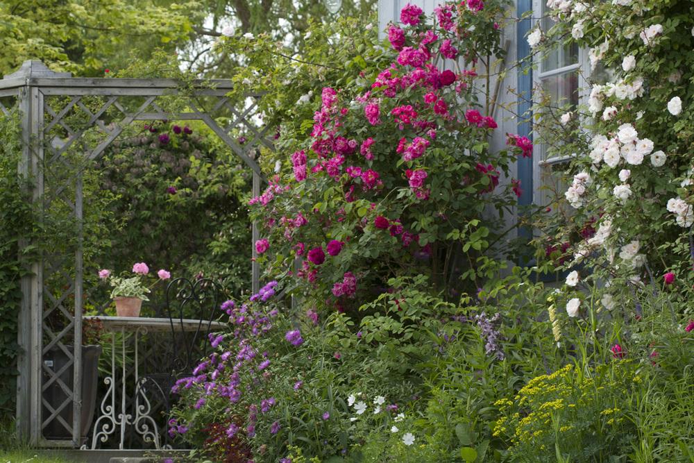 Vann, vann og mer vann tror jeg er viktig for å beholde blomstringen lengst mulig i disse varme sommerdagene.