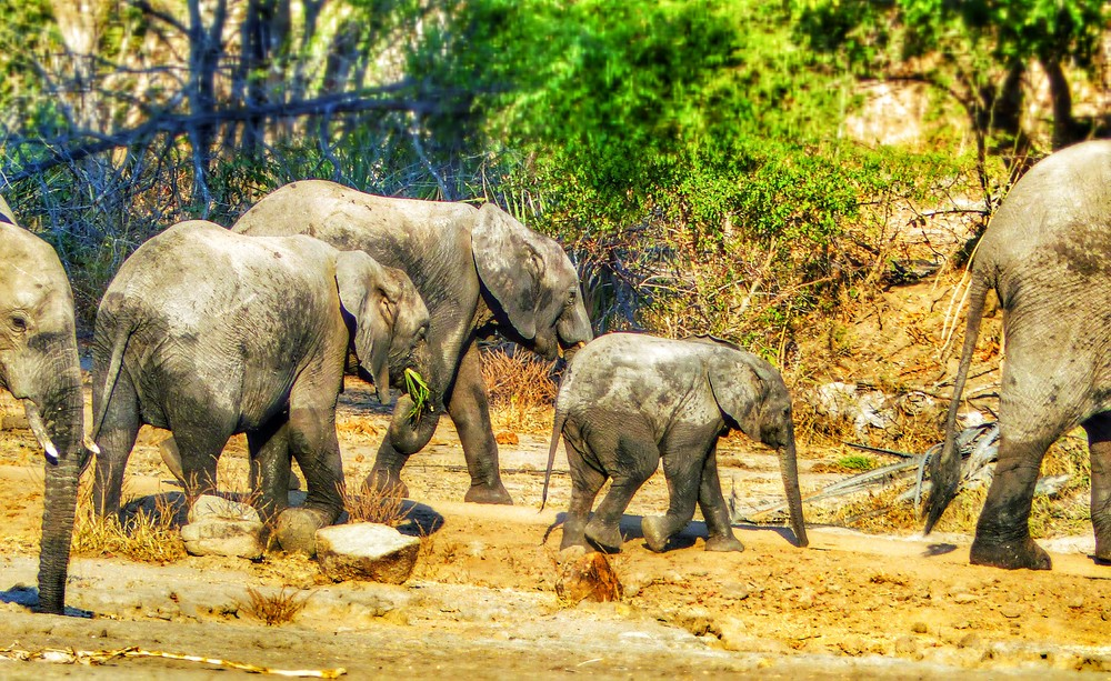 ! Mady_Elephants.JPG