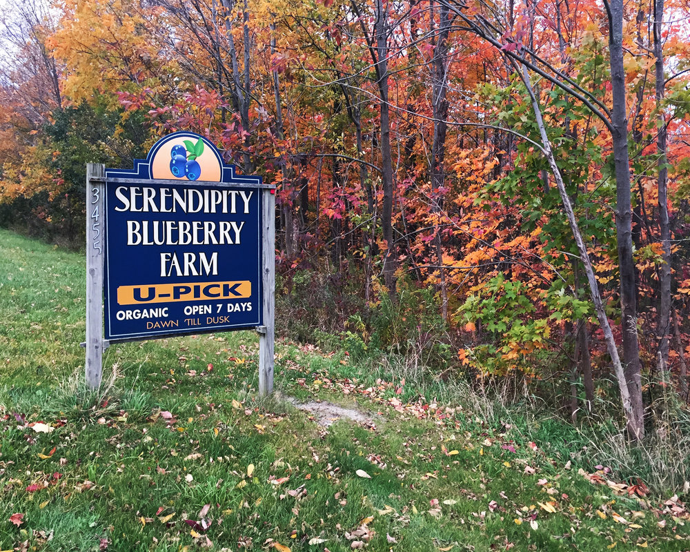 Serendipity Sign 4 copy.jpg