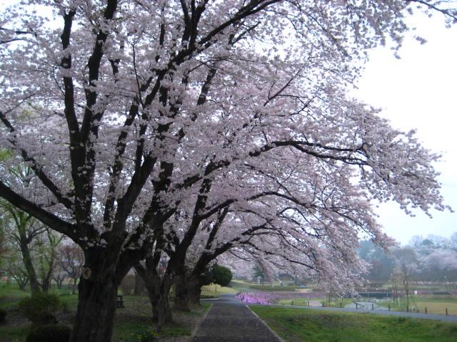 JAPANKOREA - Trees.jpg
