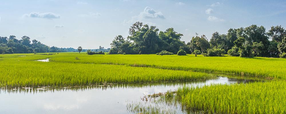 ST-Cambodia-1000x400.jpg