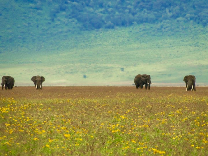 Elephants on Safari, Tanzania Africa - 3 Days*