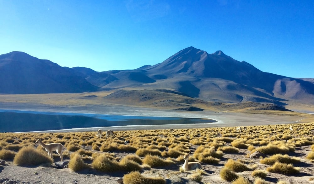 The Altiplanic Laguna Miñiques, Andes Mountains Atacama Chile - 3 Days*