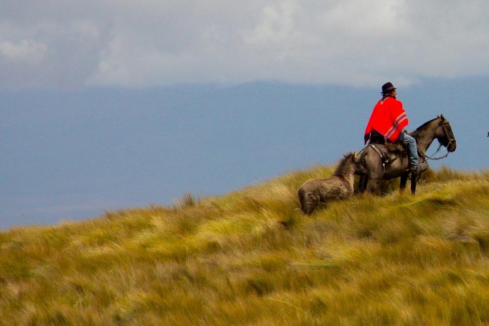 A chagra, an Ecuadorian cowboy in the Andean highlands, Ecuador - 3 Days*