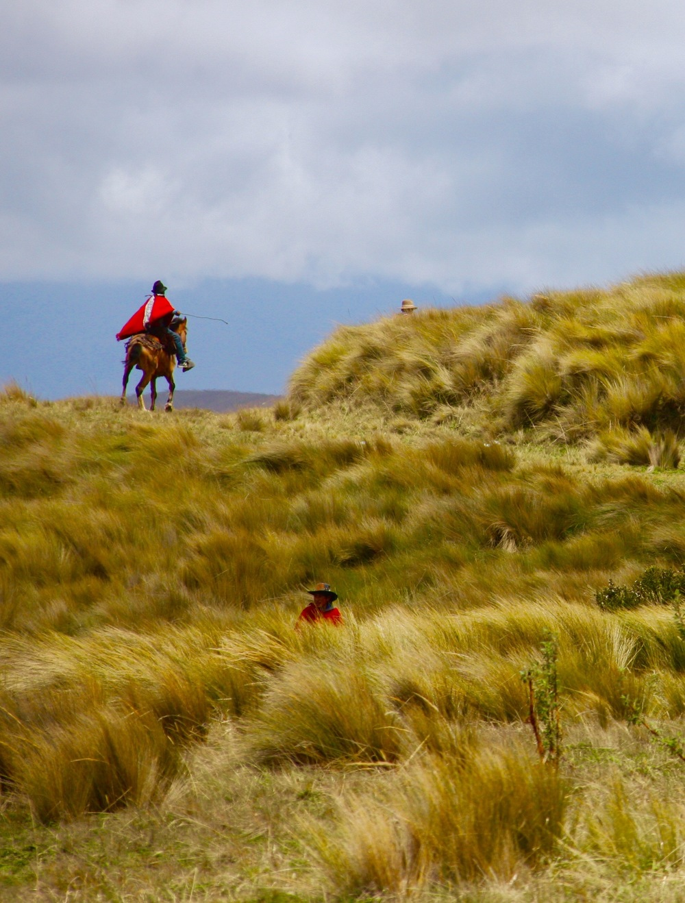 Horse and Rider in Andes Mountains Highlands, Ecuador - 3 Days*