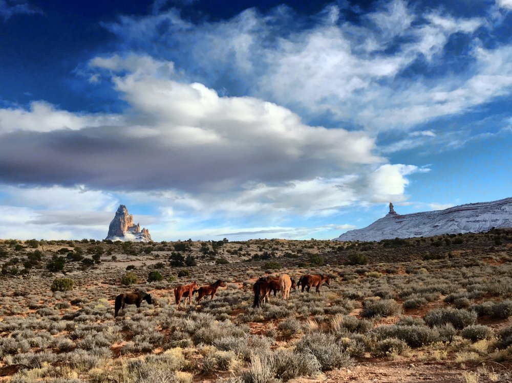 Wild Horses in Monument Valley, Arizona - 3 Days*