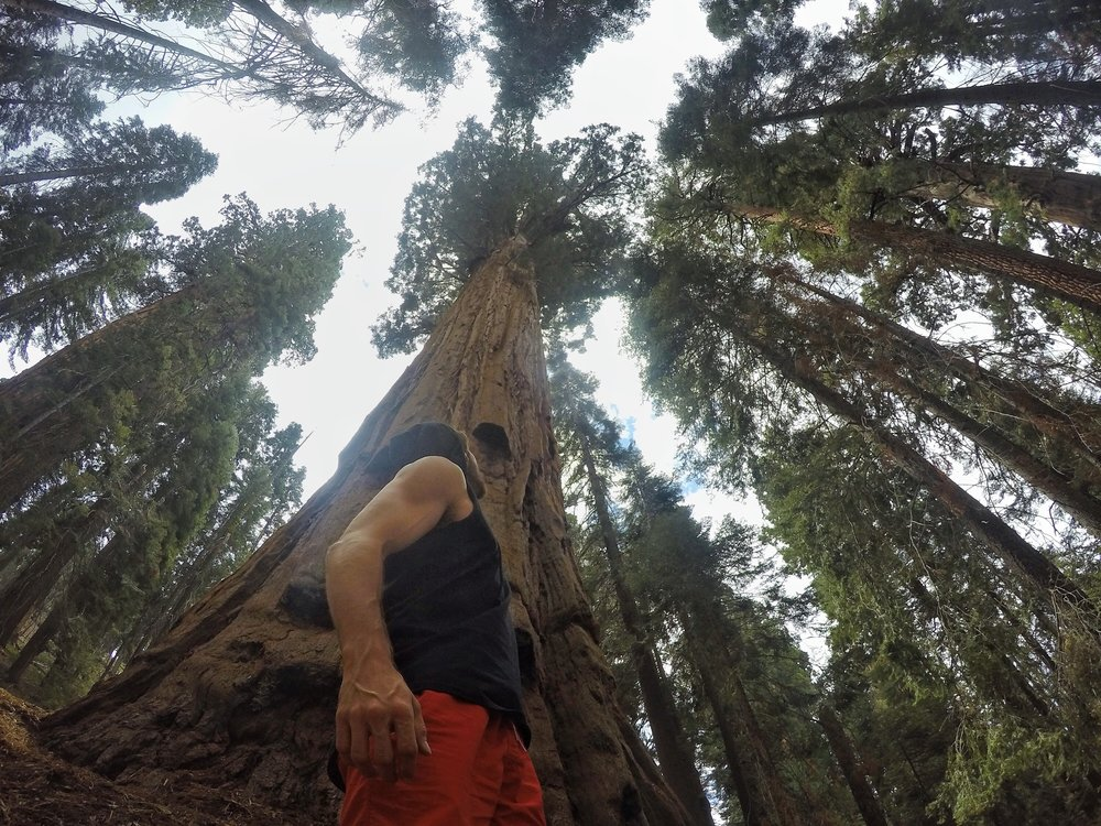 Aaron Medeiros amongst Sequoia trees, CA, US - 3 Days*