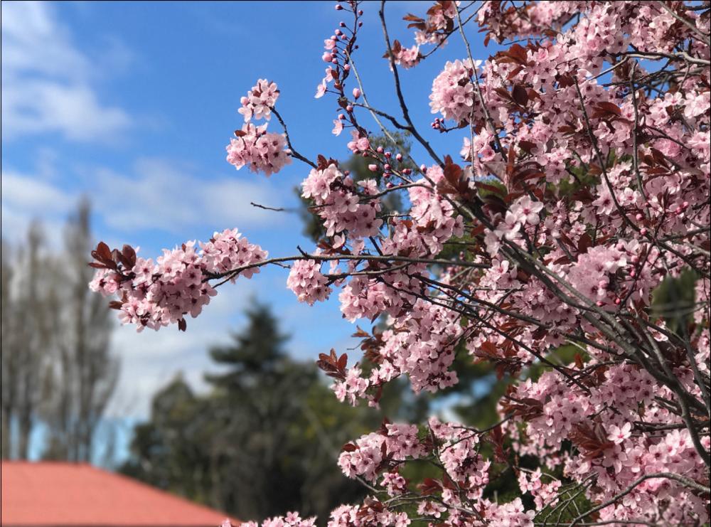 Digital Dandy Spring