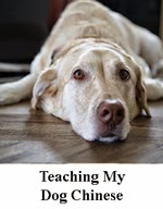 TeachingDog.jpg