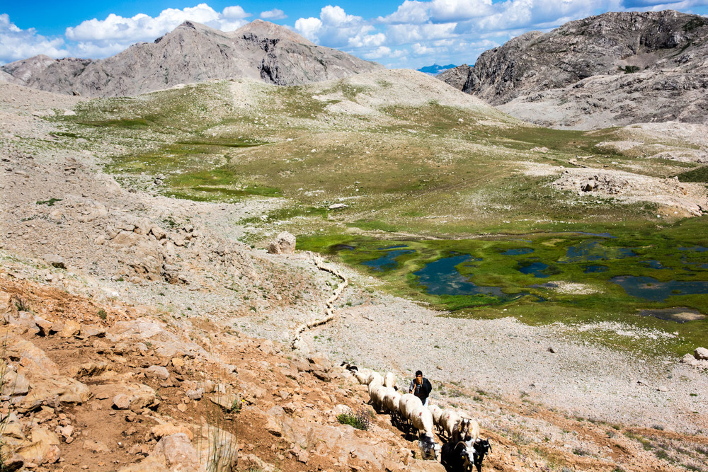 An entire village-worth of sheep and goats moves along a trail in the Munzur Mountains.