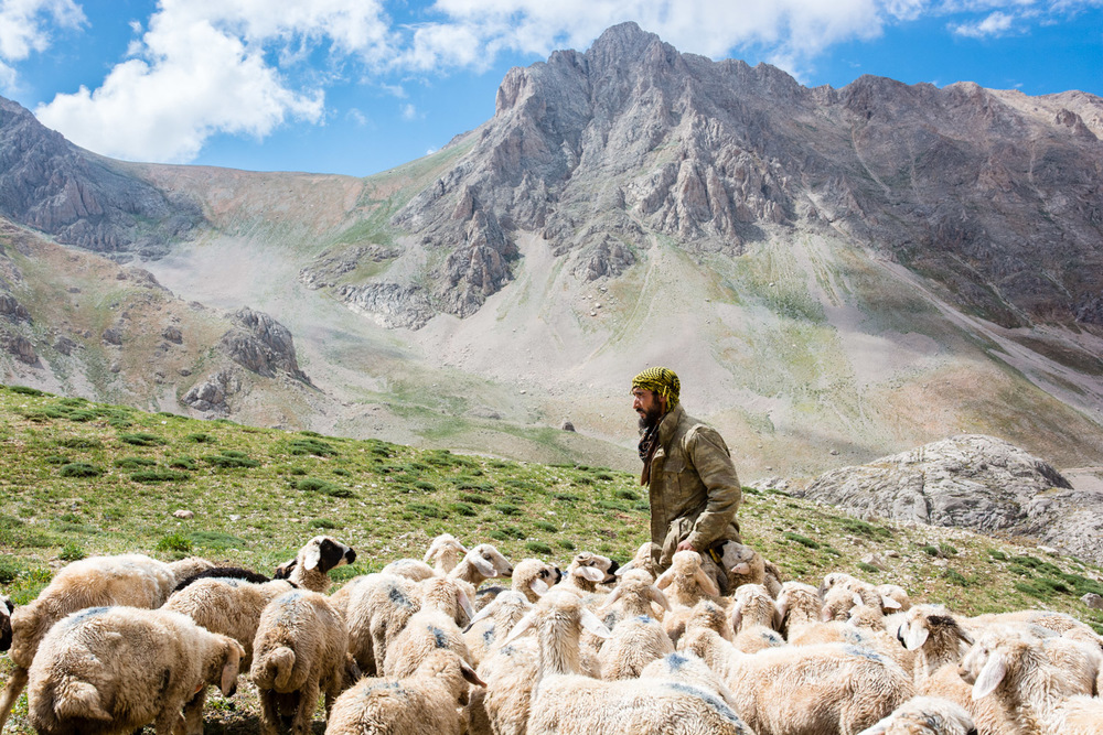 Sheep flock to their shepherd high in the Munzur Mountains.