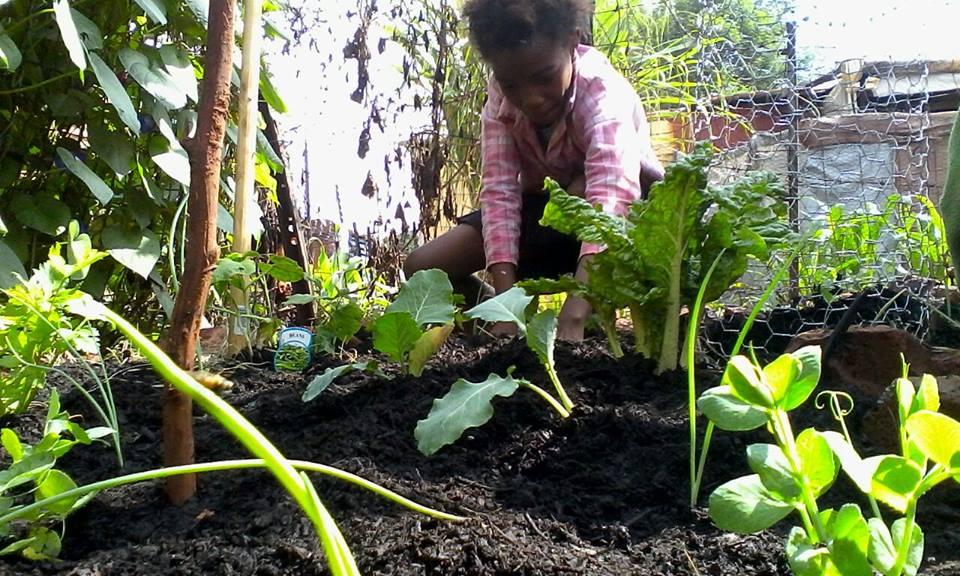 child veg garden.jpg
