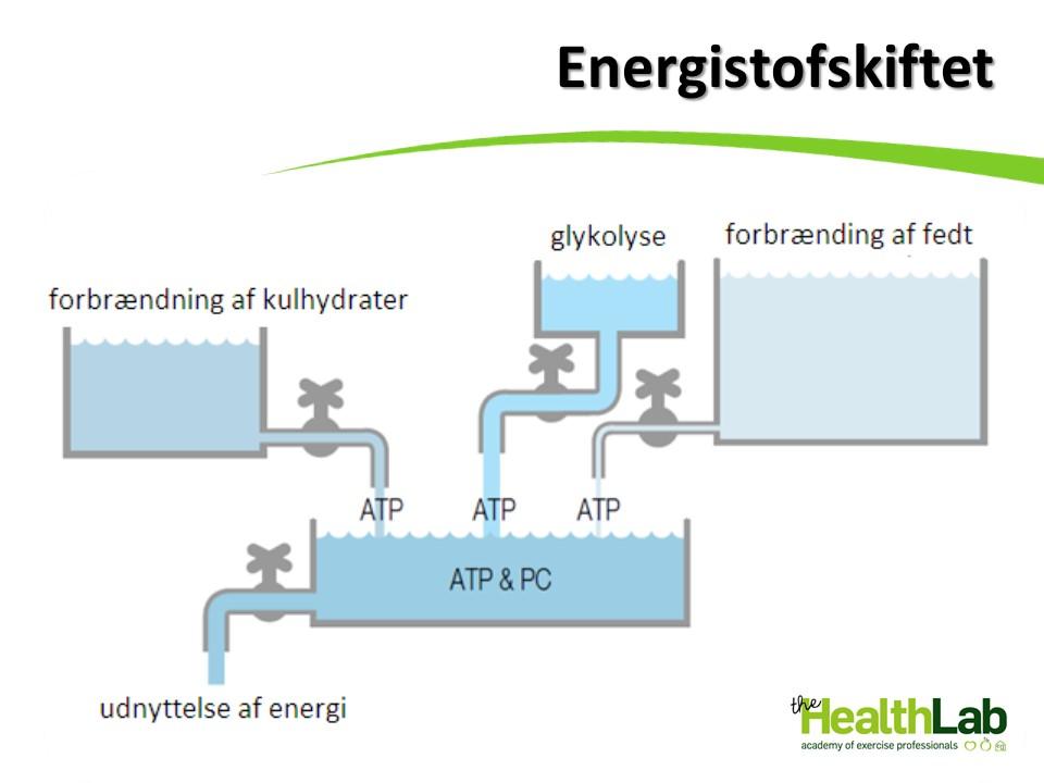 Kroppens energisystemer