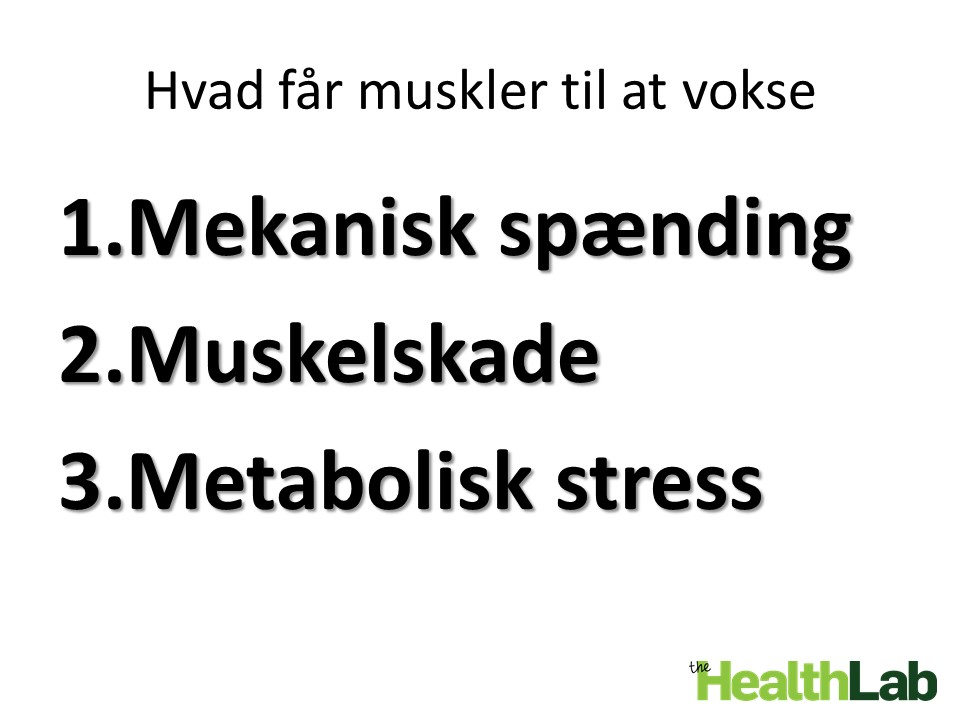 Faktorer maksimal muskelvækst