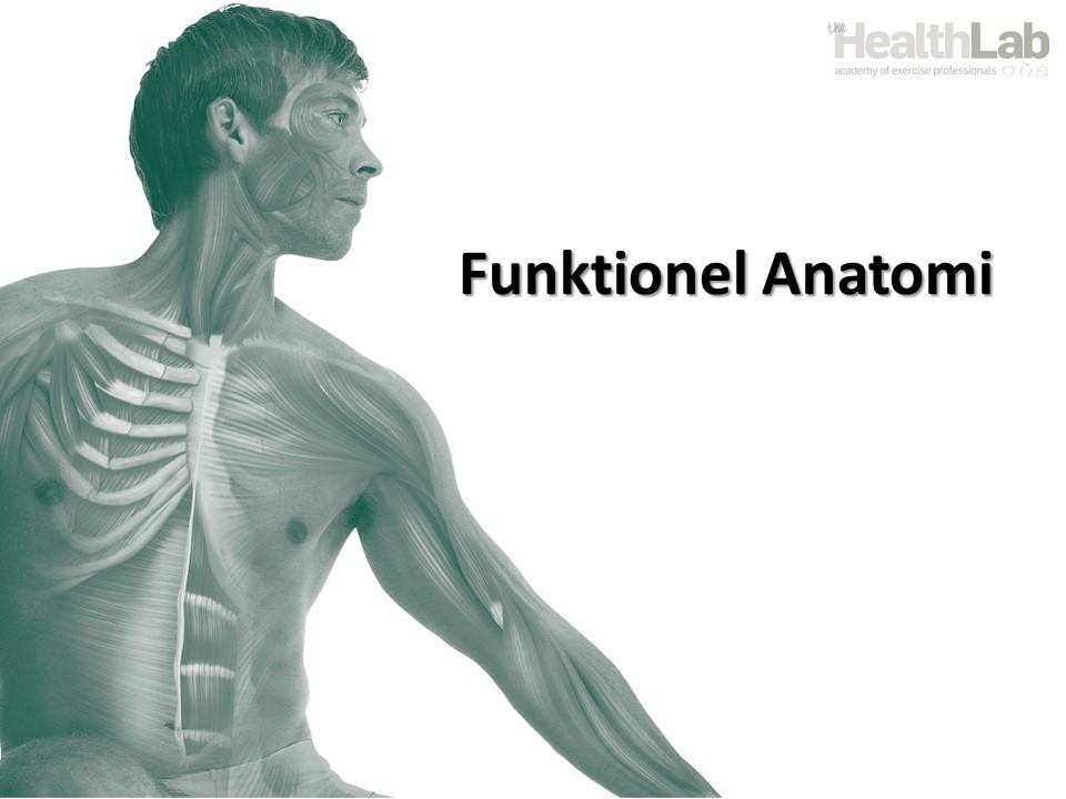 Videregående anatomi