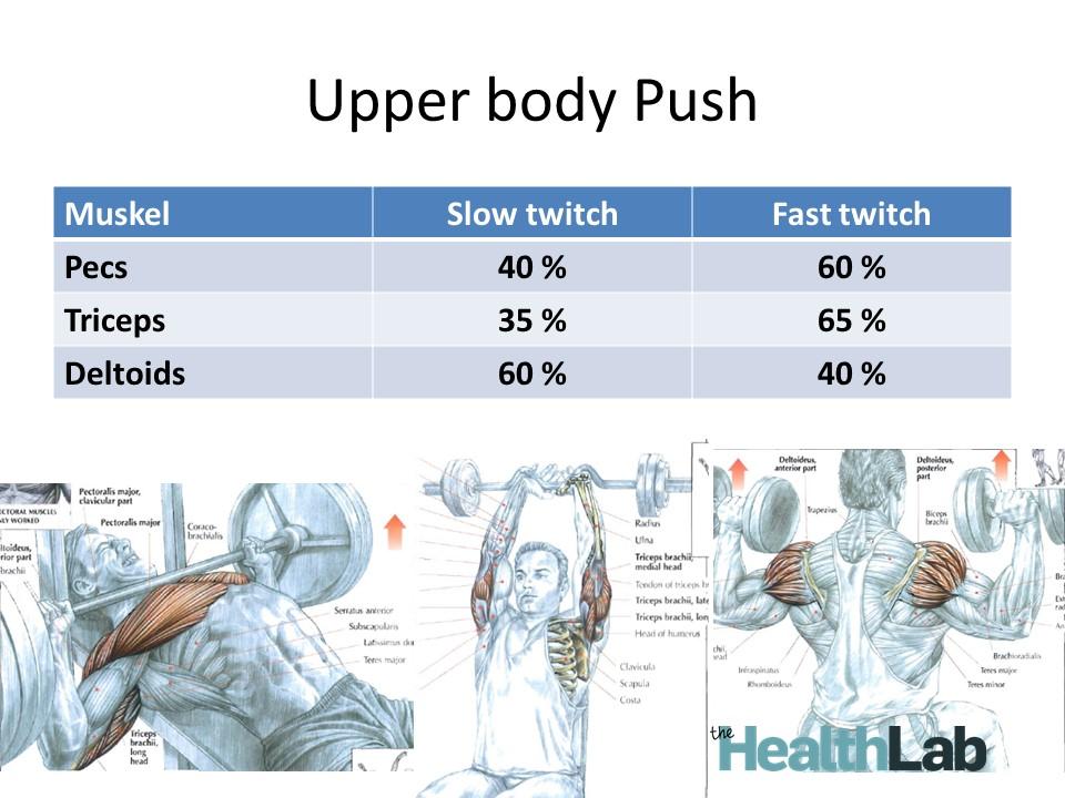 Fibertyper i muskler