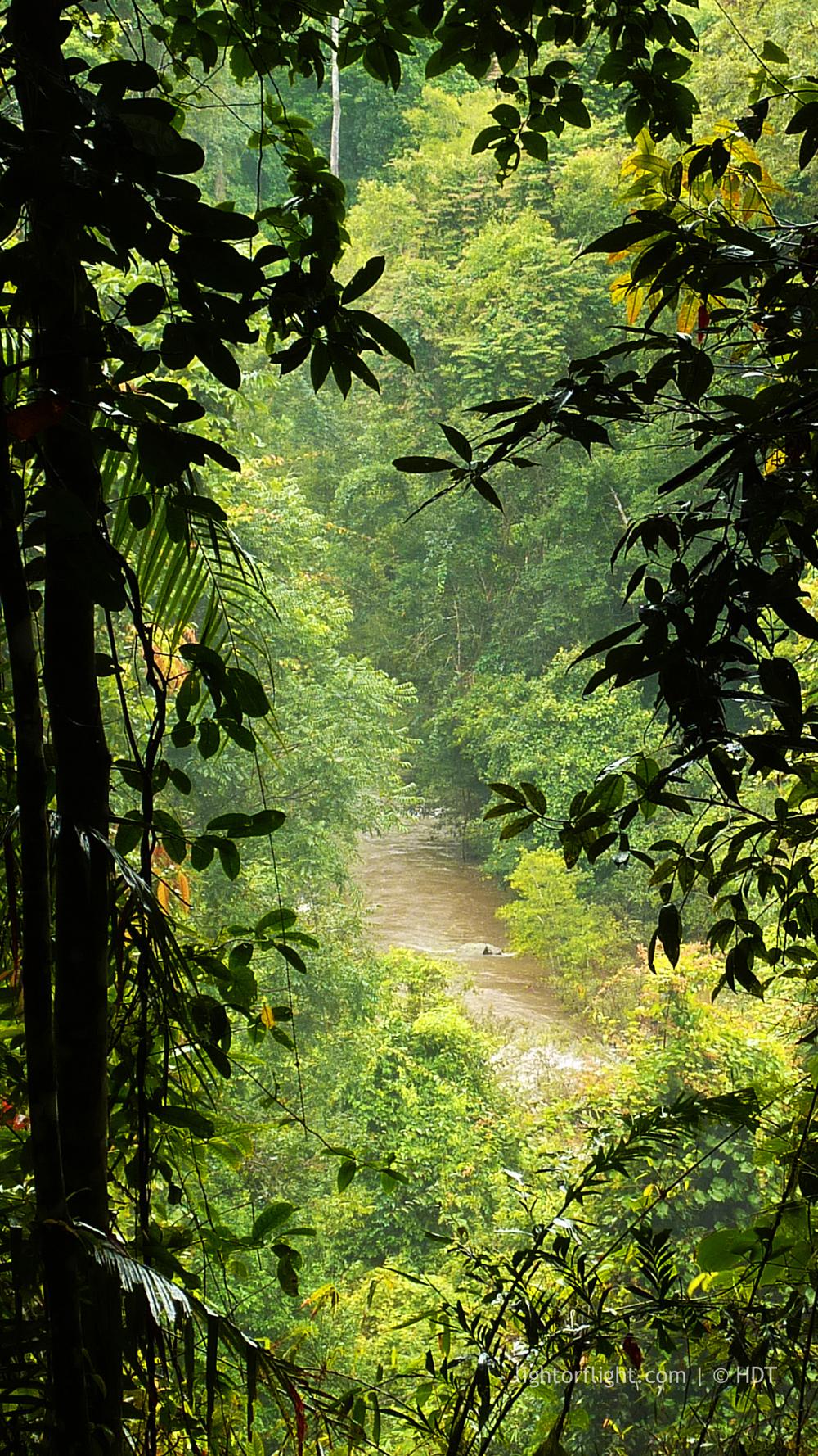 Khao Yai Jungle View